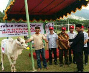 53 Ekor Sapi Qurban Didistribusikan PT Semen Padang